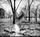 Damaged trees after ice storm, Ball State Teachers College
