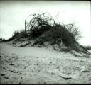 Last stand of vegetation, Indiana Dunes State Park
