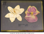 Monocot and dicot flower