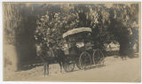 Unidentified woman in a horse-drawn carriage