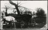 Susan Ryan Marsh, Mildred Marsh and Rodney Marsh in horse-drawn carriage