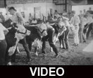 4-H Fair cattle show and riding display