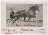 Harness racer and horse