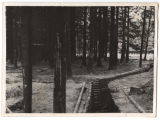Trench in the European woods