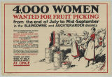 4,000 Women Wanted For Fruit Picking