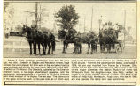 Horses bred by Yorktown postmaster